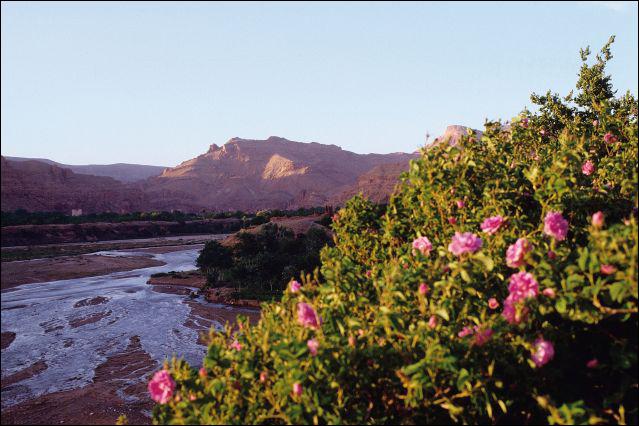 eaux florales, eau floral, fleurs d'oranger, rose, eau de fleurs d'oranger, eau de rose, maroc, vallée des roses
